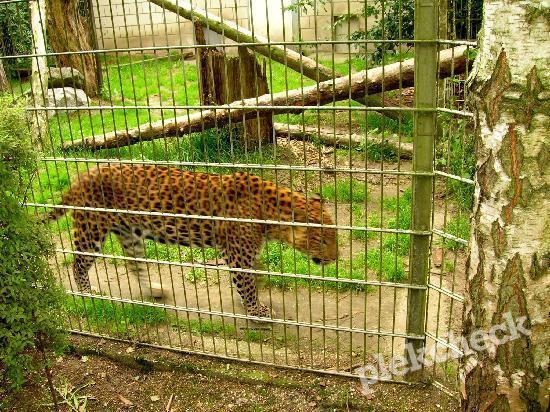 BestZOO dierentuin in Best