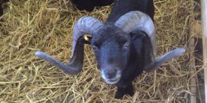 Kinderboerderij Ameland Happynes 2