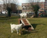 Kinderboerderij Amsterdam Stadsboerderij Zimmerhoeve 1