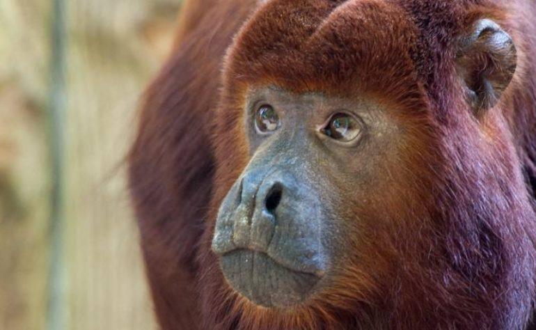 Apenheul – dierenpark