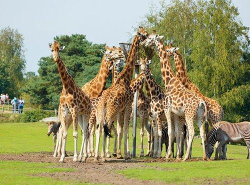 Overzicht dierentuinen Nederland PlayAdvisor Safaripark Beekse Bergen
